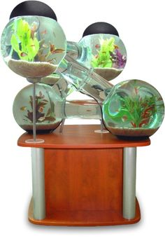 Don't You Think Your Fish Deserve Their Own Labyrinth Aquarium?