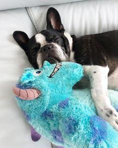 Relax dopo un weekend di lavoro. . . . . . . . . . #frenchie #frenchbullys #bully #bullybaby #frenchiepuppy #frenchielove #bouledogue #bouledogue #bouledoguefrancais #frenchielove #carlino #pug #puglife #boxer #dog #ilovemydog #cartoon