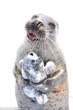 seal hugs a toy version of itself in pure joy An infatuated seal has been snapped hugging a toy version of itself in an adorable selecti.An infatuated seal has been snapped hugging a toy version of itself in an adorable selecti. Happy Animals, Cute Funny Animals, Cute Baby Animals, Animals And Pets, Smiling Animals, Animals Sea, Cute Creatures, Beautiful Creatures, Animals Beautiful