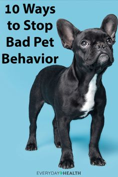 Transform your from troublemaker to the best-behaved pet on the block! Health Articles, Training Your Dog, Pet Health, Puppy Love, Best Dogs, Dogs And Puppies, Behavior, French Bulldog, Pets