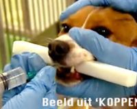 MORE SIGNATURES NEEDED  Stop animal laboratory experiments at Janssen Pharmaceutica in Belgium !