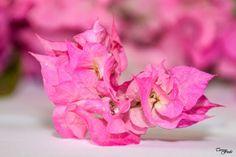 Teresa Fndz Photography: Flor de Papel