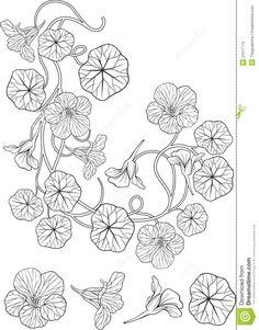 Nasturtium Flower Art Nouveau Style Tattoo Stock Photos - Image ...