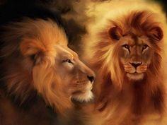 Male Lion Drawings | Lion Wallpaper, Free Lion Wallpaper, Lion Desktop