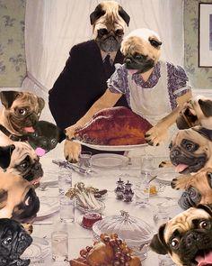 Pug Thanksgiving