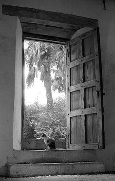 Today's Dose of Cuteness - a Collection of Cats in Windows and Doors