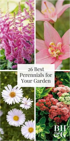 Better homes gardens at the walmart garden center flowers purple coneflower peonies siberian iris and daffodils are just a few of the mightylinksfo