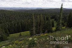 Title  Seeing Forever - Yellowstone  Artist  Belinda Greb  Medium  Photograph