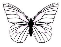 butterfly wing shapes   drawingbutterfly_8-2_design_shape ...