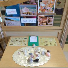 Seashells at our science center!