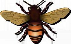 Cómo acabar con las molestas moscas