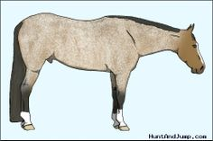 Want to learn horse genetics? This is the site to do it! A wonderful game that teaches you all about genetics. Fabulous community too! Come check it out today!