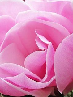 Rhododendron, Camellia & Magnolia Group Centenary Celebrations|