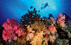 great coral reef pictures | Reef Destruction - GGY230F10 - Lipscomb - Confluence