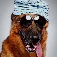 cool dog with his shades and knit cap