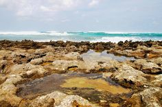 Tide Pools by Turtle Bay SEIS, via Flickr Turtle Bay Resort, North Shore Oahu, Tide Pools, Water, Outdoor, Gripe Water, Outdoors, Outdoor Games, The Great Outdoors