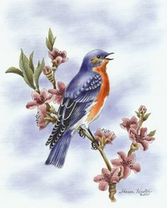 """""""Eastern Bluebird"""".  This is a Pen & Ink with Oil Rouging pattern packet. If you wish to purchase a completed piece of artwork visit my website on how to contact me and additional details: www.sharonkuester.com"""