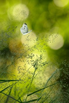 The fine detail of the grass against the fragility that is the butterfly is quite wonderful.