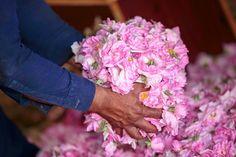 Valentina Kokoro Bellezza Naturale: #SPIGNATTANDO: GOMMAGE VISO NUTRIENTE ALLA ROSA DI...