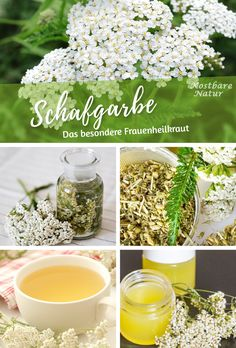 Schafgarbe ist ein großes Heilkraut, sollte aber sehr bedacht eingesetzt werden Yarrow, the medicinal plant of the year can help with many health ailments. It is especially useful for circulation and bleeding Garden Types, Eat Smart, Growing Herbs, Calories, Natural Cosmetics, Medicinal Plants, Raised Garden Beds, Irrigation, Permaculture
