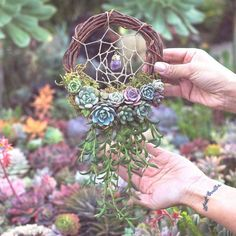 succulent dreamcatcher or wreath! succulent lover decor aesthetic care and diy, cactus lover, garden, plants are friends. outdoor or indoor (as long as you've got a window! Artificial Succulents, Cacti And Succulents, Planting Succulents, Succulent Gardening, Succulent Terrarium, Buy Terrarium, Diy Plante, Deco Nature, Succulent Wreath