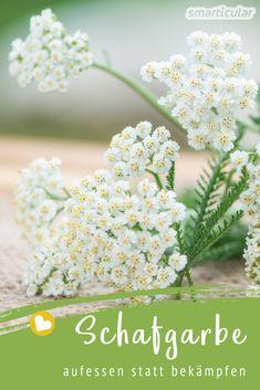 Die Schafgarbe ist eine reiche Quelle gesunder Inhaltsstoffe für innere und äußere Anwendungen. In Kosmetik und als Tee wirkt die Schafgarbe durchblutungsfördernd, entzündungshemmend und krampflösend. Achillea Millefolium, Home Remedies, Herbalism, Herbs, Health, Flowers, Plants, Homemade, Edible Plants