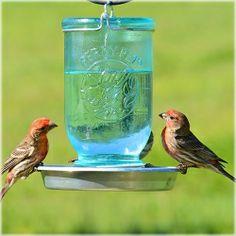 Mason Jar Bird Waterer