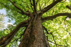 wycinka drzew pielęgnacja drzew