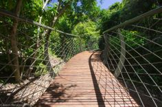 The walkway meanders through the Arboretum, also known as the Enchanted Forest, in the Kirstenbosch Botanical Garden, Cape Town. The 130 metre long walkway is made from galvanised steel and timber, and will stretch 11 metres above the ground.