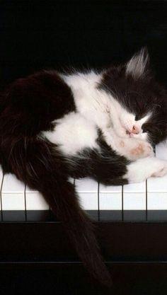 Kitty Sleeping on the Keys