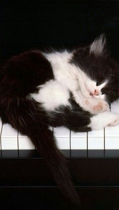 Kitty on the Keys! -one of my favorite musical pieces by Frank Mills ❤️