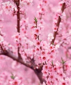 pink flowers ♥ stylefruits Inspiration ♥