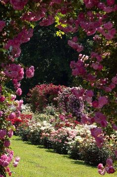 Secret Rose Garden I would love my yard look like this. I would be so Happy sitting and reading in this garden Secret Rose Garden I would lo Beautiful Roses, Beautiful Gardens, Jardin Decor, The Secret Garden, Garden Cottage, Dream Garden, Pretty Flowers, Summer Flowers, Garden Inspiration