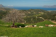 Spring in Polyrrinia. Kissamos, Crete Greece.