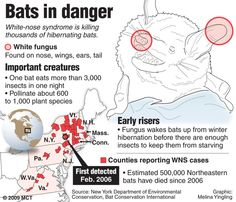 White-nose Syndrome death toll has reached more than 5.7 MILLION bats