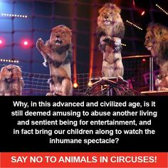 No circus quotes | Just say No | Quotes : circus, zoo, entertainment, delphinarium...