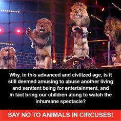 No circus quotes | Just say No | Quotes : circus, zoo, entertainment, delphinarium...