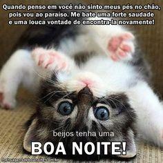 Boa Noite Whatsapp Imagens Mundo Whatsapp
