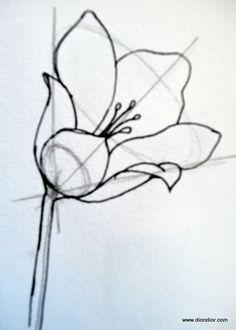 Drawing bowl shape flowers