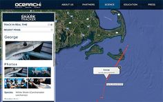 A group called Ocearch is collecting data to help restore the great white population.