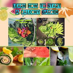 Tower Garden, Balcony Garden, Seed Raising, Water Spinach, Liquid Fertilizer, Mini Greenhouse, Soup Kitchen, Mediterranean Garden, Growing Seeds