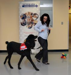 therapy dogs for veterans with ptsd