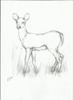 simple line drawings of deer - Google Search