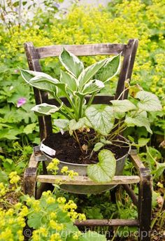 Creative and Frugal DIY Garden Art Projects: Old chair is the perfect garden pot holder