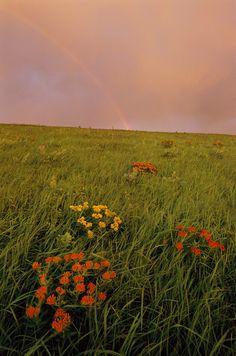 Konza Prairie, Kansas - by Michael Forsberg