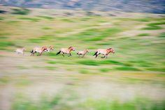 ~ The wild horses of Mongolia ~ by Prakash Bajracharya on 500px