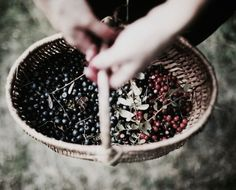 Poison Berries | The North Realm