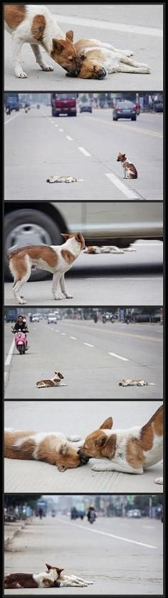 A dog rescues his injured friend bout to cry