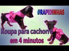 #RAPIDINHAS: Roupa para cachorro em 4 minutos - YouTube