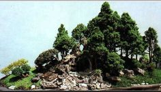 Museo del Bonsai, Things To Do, Marbella - The Bonsai Museum is a magnificent collection of beautiful miniature trees and forests, many of them well known for t... - Read More http://www.mydestination.com/marbella/things-to-do/131744/museo-del-bonsai